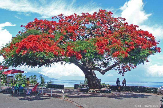 faaa-flamboyant-2006-tahiti-heritage